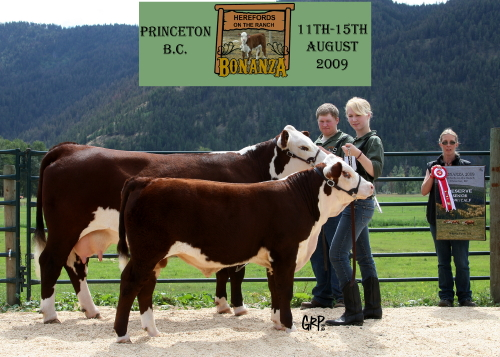 1B9W0764 Open Res Mature Cow Calf 500 Llolyn Jude Griffen et   Eventual Grand Jersey, winning the Mature Cow Class ...